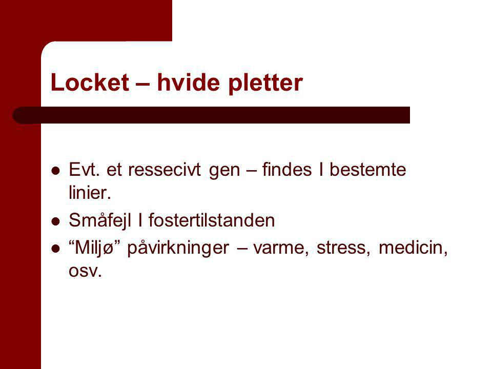 Locket – hvide pletter Evt. et ressecivt gen – findes I bestemte linier. Småfejl I fostertilstanden.