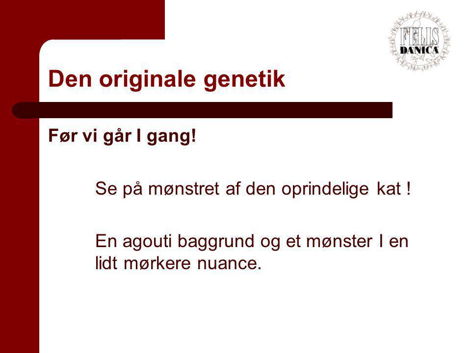 Den originale genetik Før vi går I gang!
