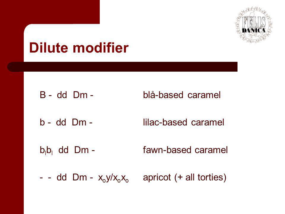 Dilute modifier B - dd Dm - blå-based caramel