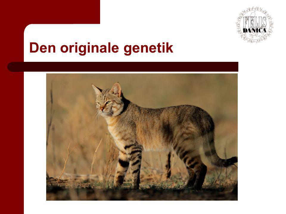 Den originale genetik