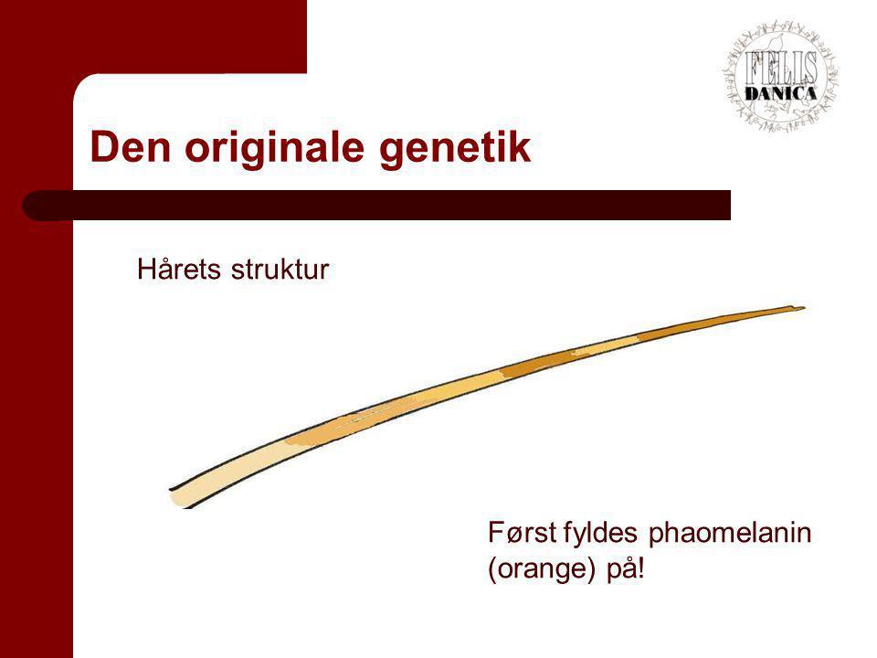 Den originale genetik Hårets struktur