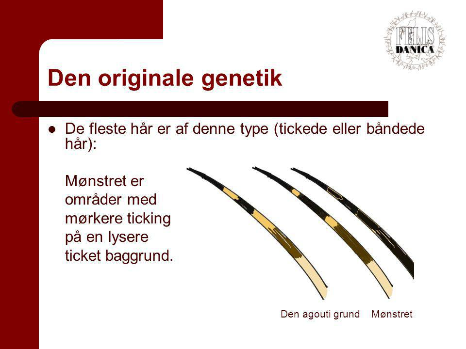 Den originale genetik De fleste hår er af denne type (tickede eller båndede hår): Mønstret er. områder med.
