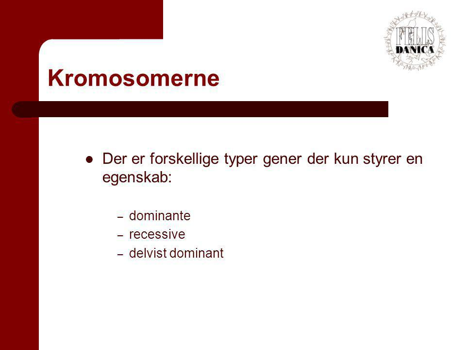 Kromosomerne Der er forskellige typer gener der kun styrer en egenskab: dominante.