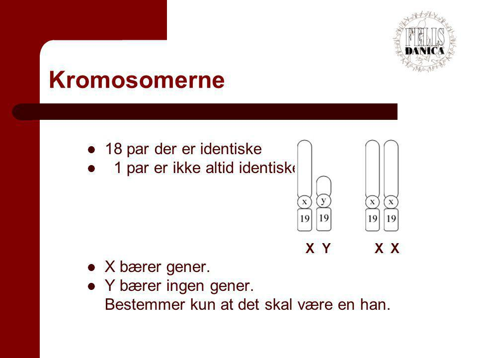 Kromosomerne 18 par der er identiske 1 par er ikke altid identiske