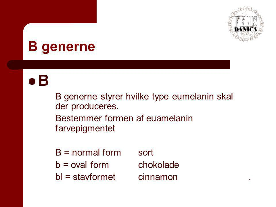 B generne B. B generne styrer hvilke type eumelanin skal der produceres. Bestemmer formen af euamelanin farvepigmentet.