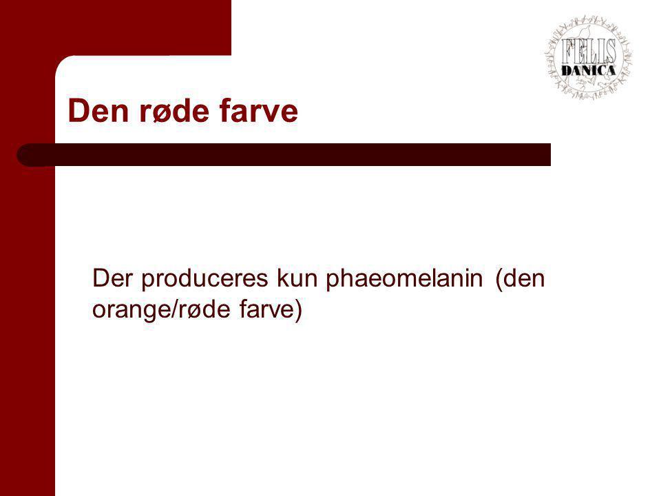 Den røde farve Der produceres kun phaeomelanin (den orange/røde farve)