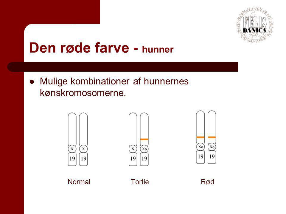 Den røde farve - hunner Mulige kombinationer af hunnernes kønskromosomerne.