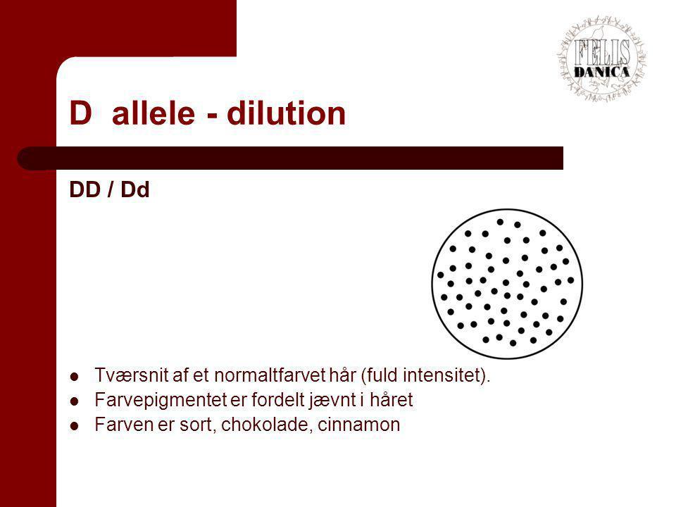 D allele - dilution DD / Dd