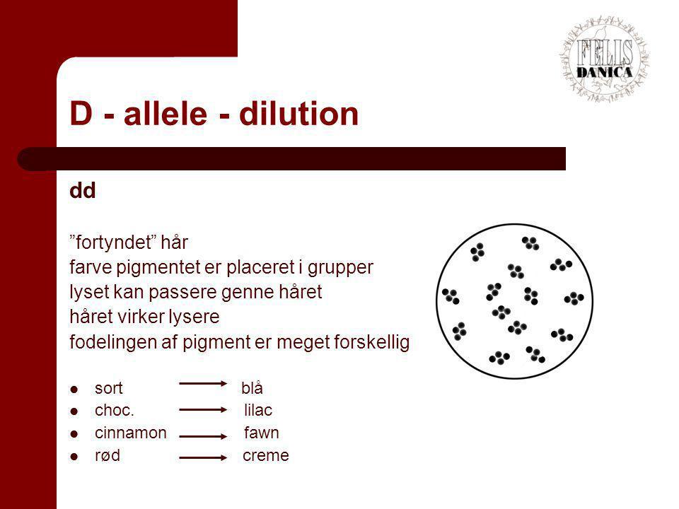 D - allele - dilution dd fortyndet hår