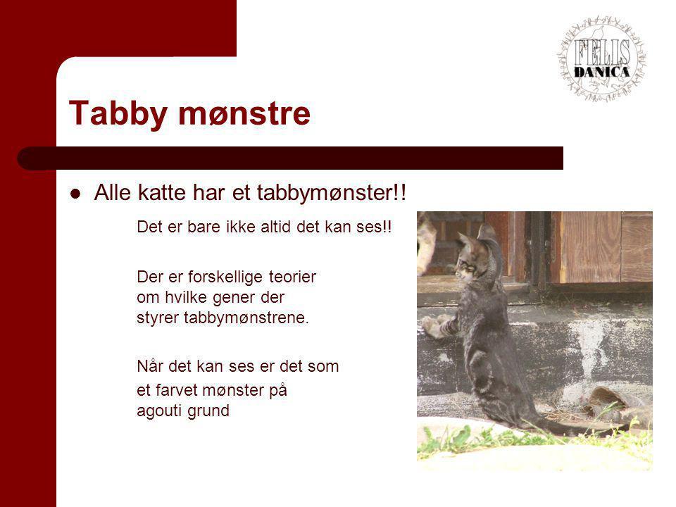Tabby mønstre Alle katte har et tabbymønster!!