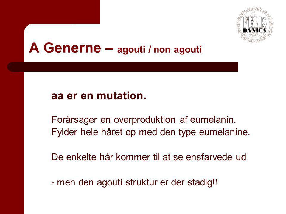 A Generne – agouti / non agouti
