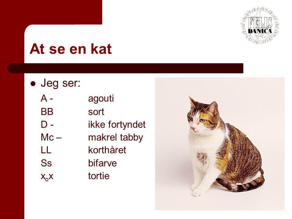 At se en kat Jeg ser: A - agouti BB sort D - ikke fortyndet