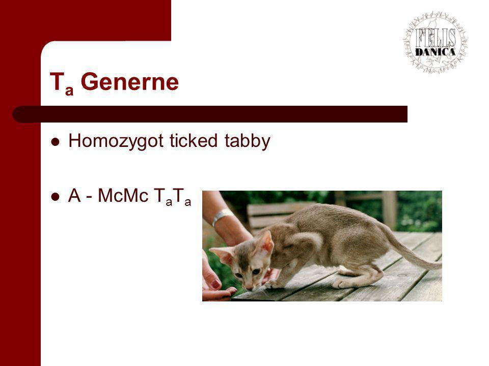 Ta Generne Homozygot ticked tabby A - McMc TaTa