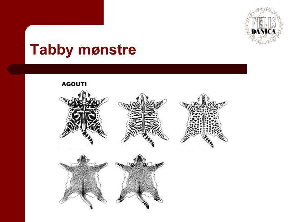 Tabby mønstre