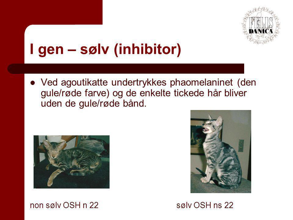 I gen – sølv (inhibitor)