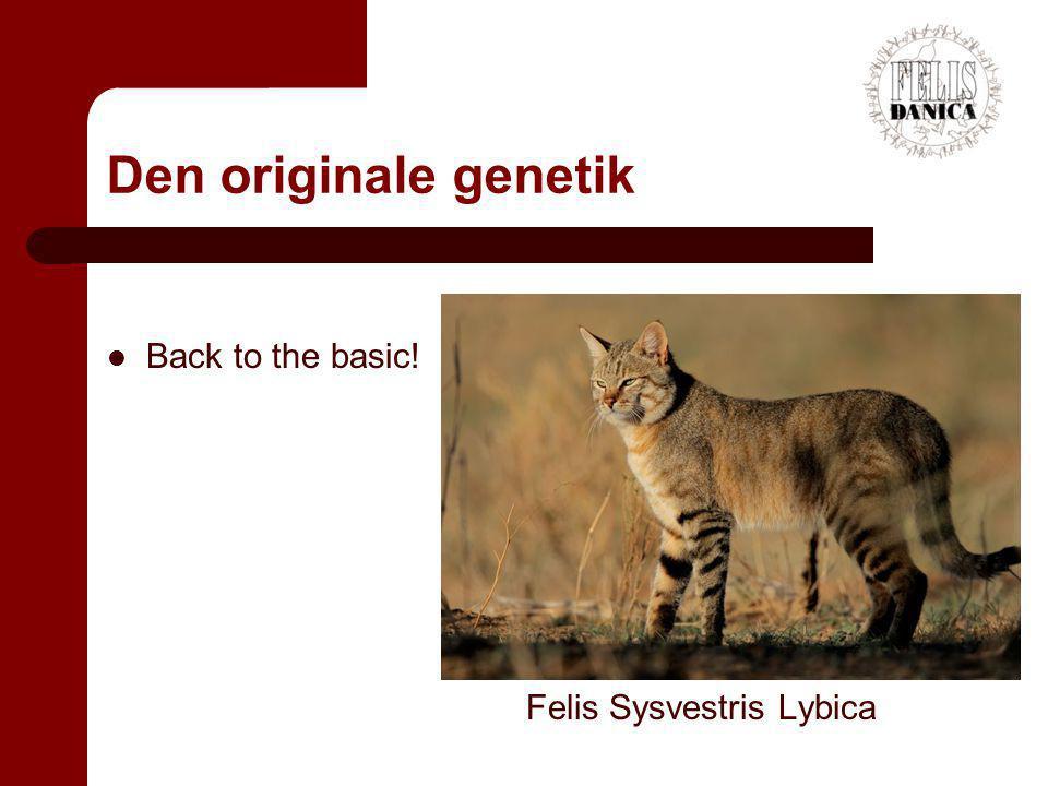 Den originale genetik Back to the basic! Felis Sysvestris Lybica