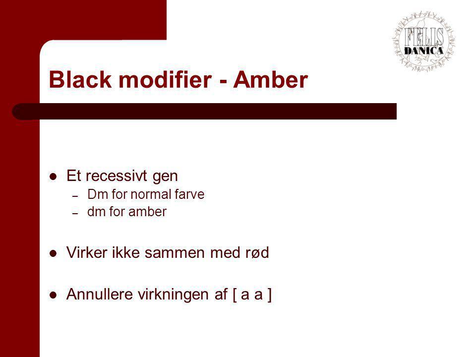 Black modifier - Amber Et recessivt gen Virker ikke sammen med rød