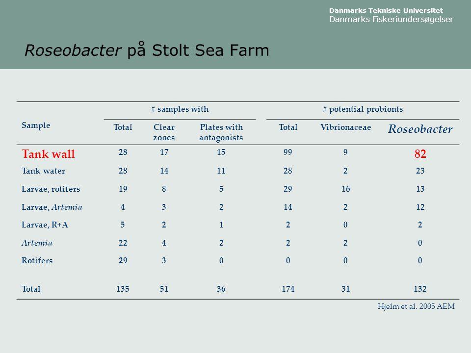 Roseobacter på Stolt Sea Farm