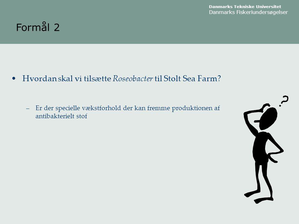 Formål 2 Hvordan skal vi tilsætte Roseobacter til Stolt Sea Farm