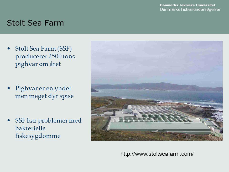 Stolt Sea Farm Stolt Sea Farm (SSF) producerer 2500 tons pighvar om året. Pighvar er en yndet men meget dyr spise.