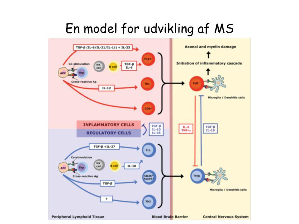 En model for udvikling af MS