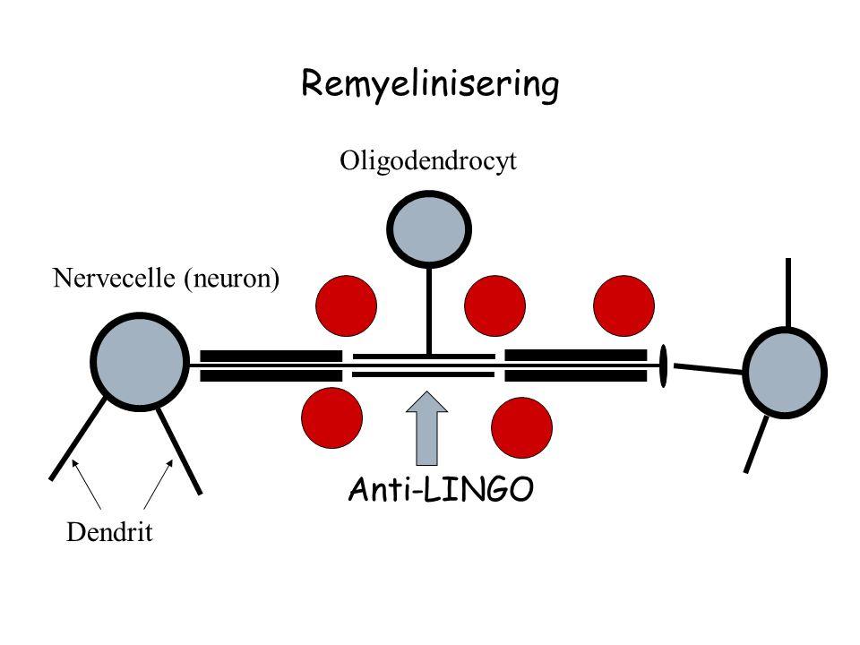Remyelinisering Oligodendrocyt Nervecelle (neuron) Anti-LINGO Dendrit