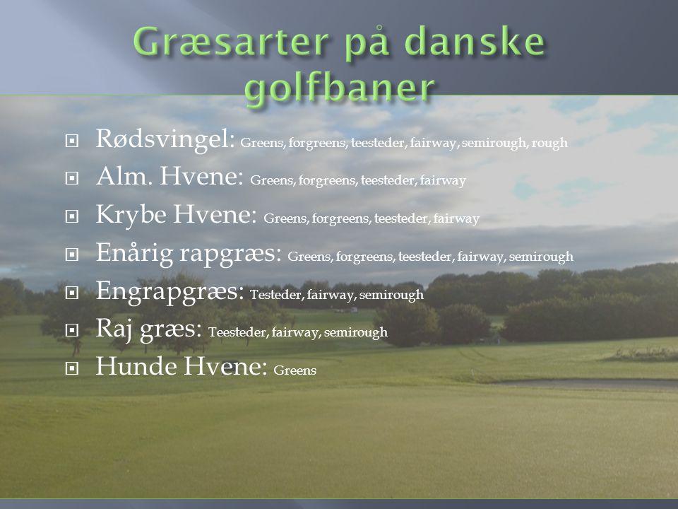 Græsarter på danske golfbaner