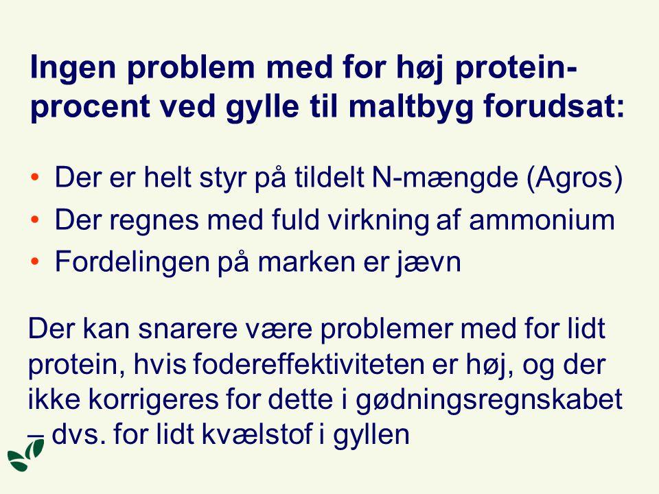Ingen problem med for høj protein-procent ved gylle til maltbyg forudsat: