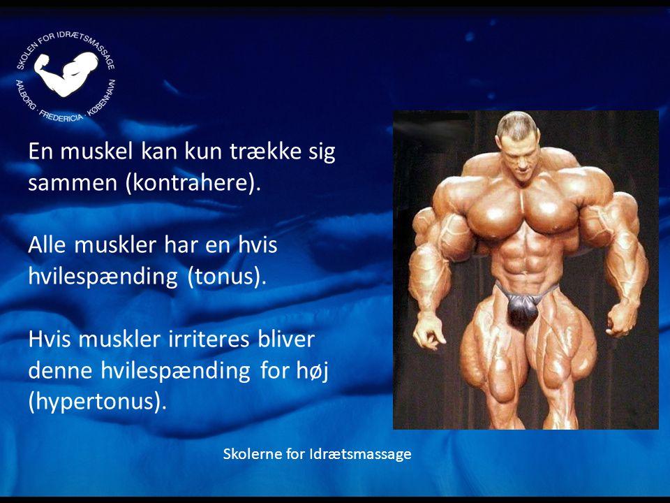 En muskel kan kun trække sig sammen (kontrahere).