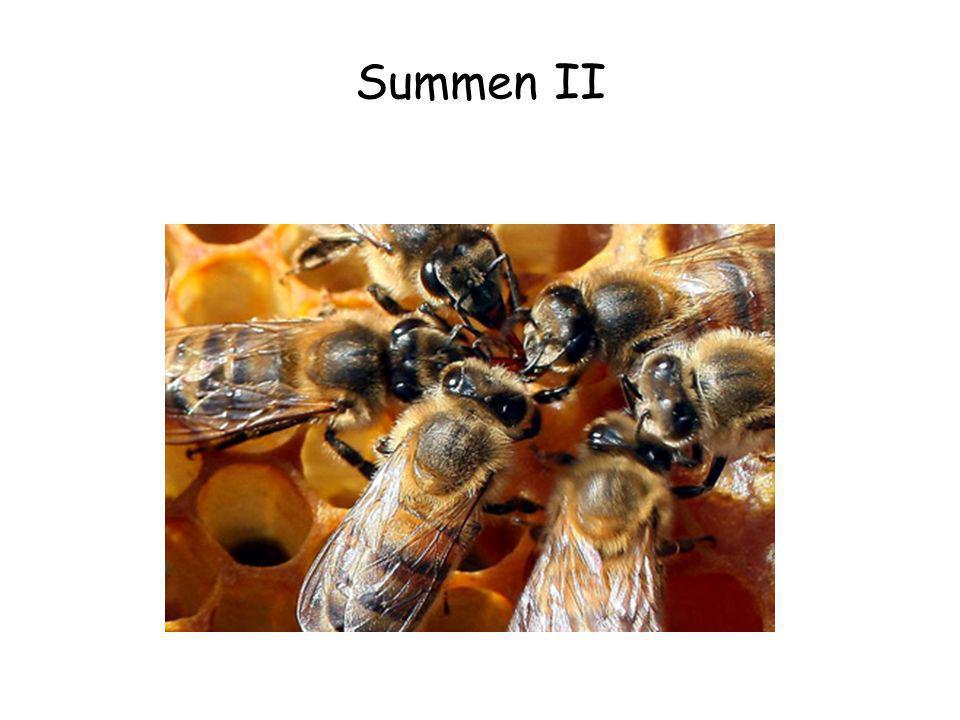 Summen II