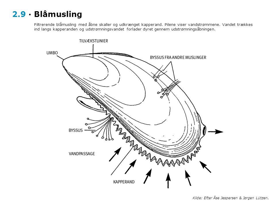 2.9 · Blåmusling