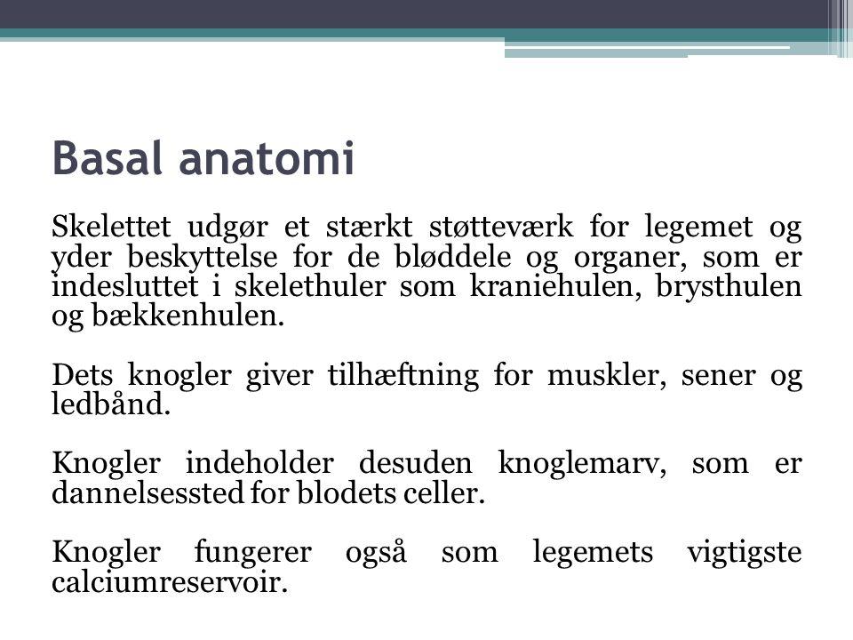 Basal anatomi