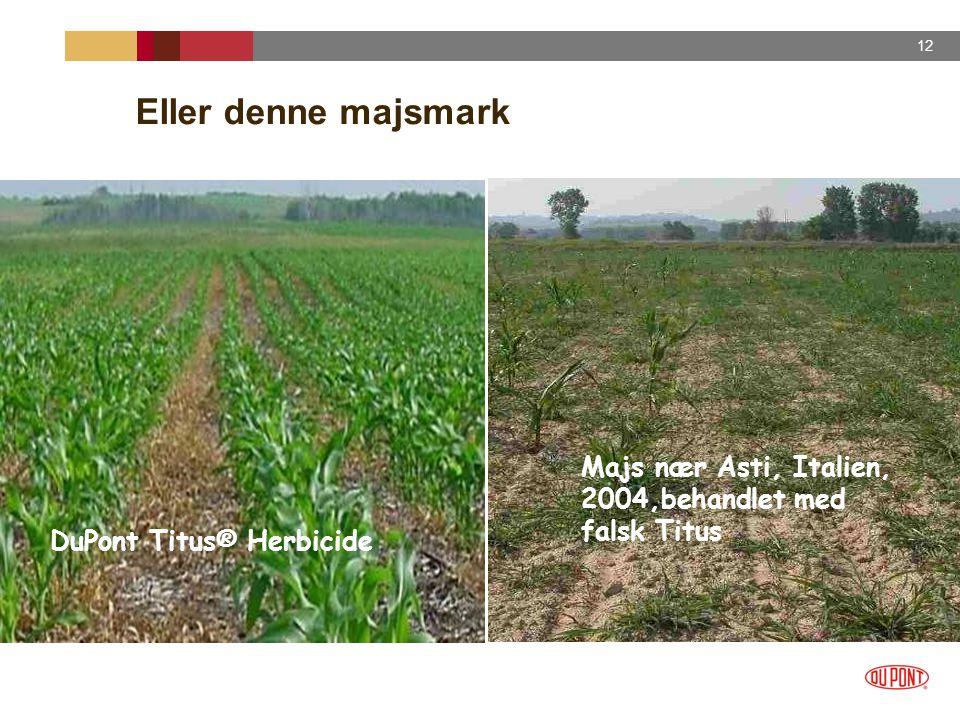 Eller denne majsmark Majs nær Asti, Italien, 2004,behandlet med falsk Titus DuPont Titus® Herbicide