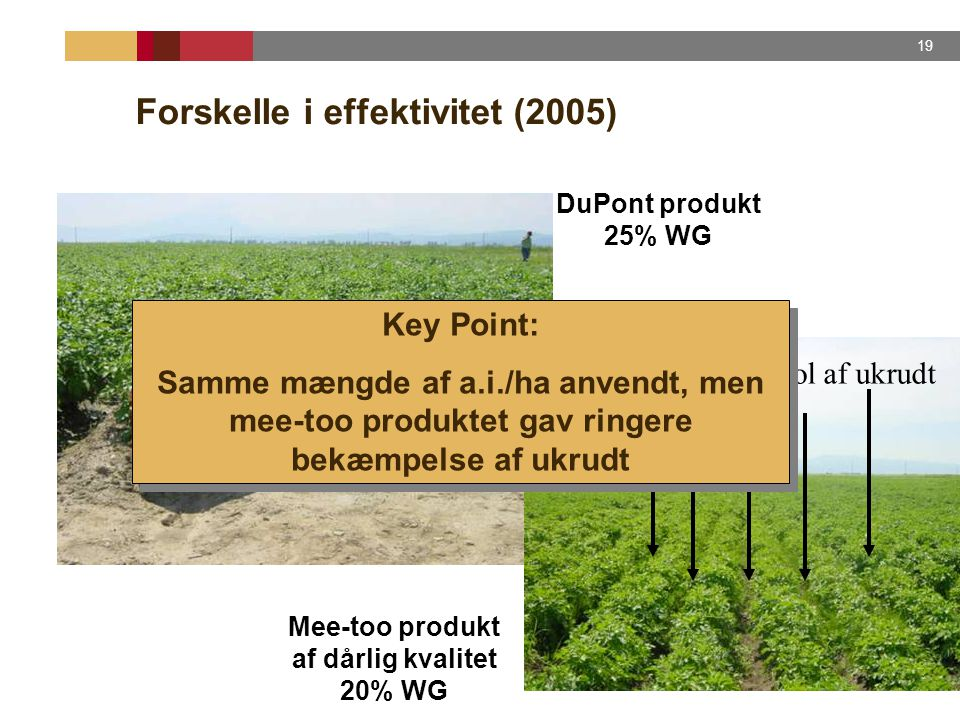Forskelle i effektivitet (2005)