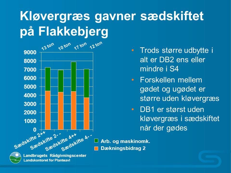 Kløvergræs gavner sædskiftet på Flakkebjerg