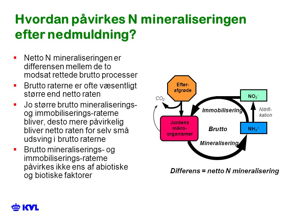 Hvordan påvirkes N mineraliseringen efter nedmuldning