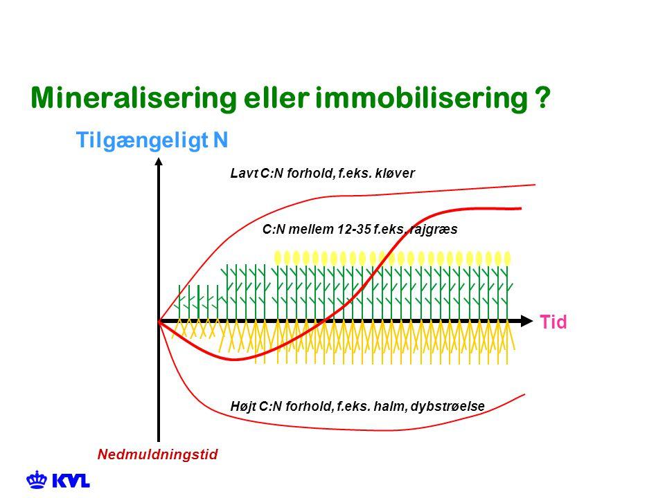 Mineralisering eller immobilisering