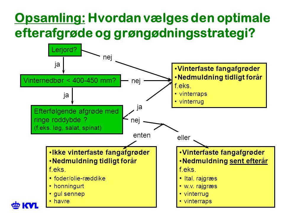 Opsamling: Hvordan vælges den optimale efterafgrøde og grøngødningsstrategi