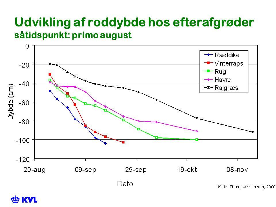Udvikling af roddybde hos efterafgrøder såtidspunkt: primo august