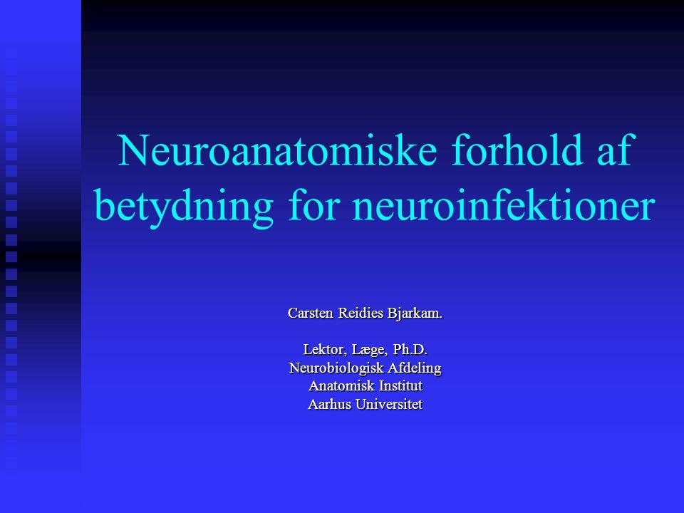 Neuroanatomiske forhold af betydning for neuroinfektioner
