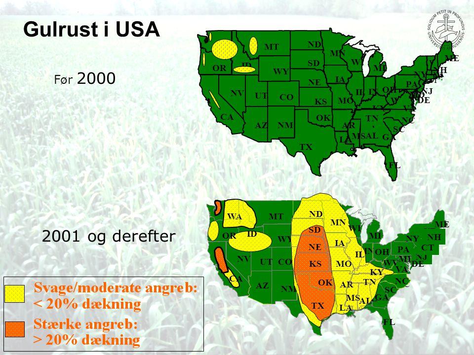 Gulrust i USA 2001 og derefter Før 2000 MT ND MN ME SD WI ID OR MI WY