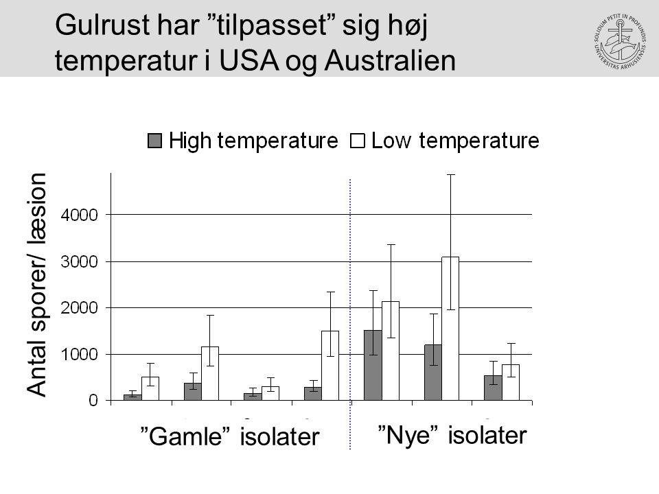 Gulrust har tilpasset sig høj temperatur i USA og Australien