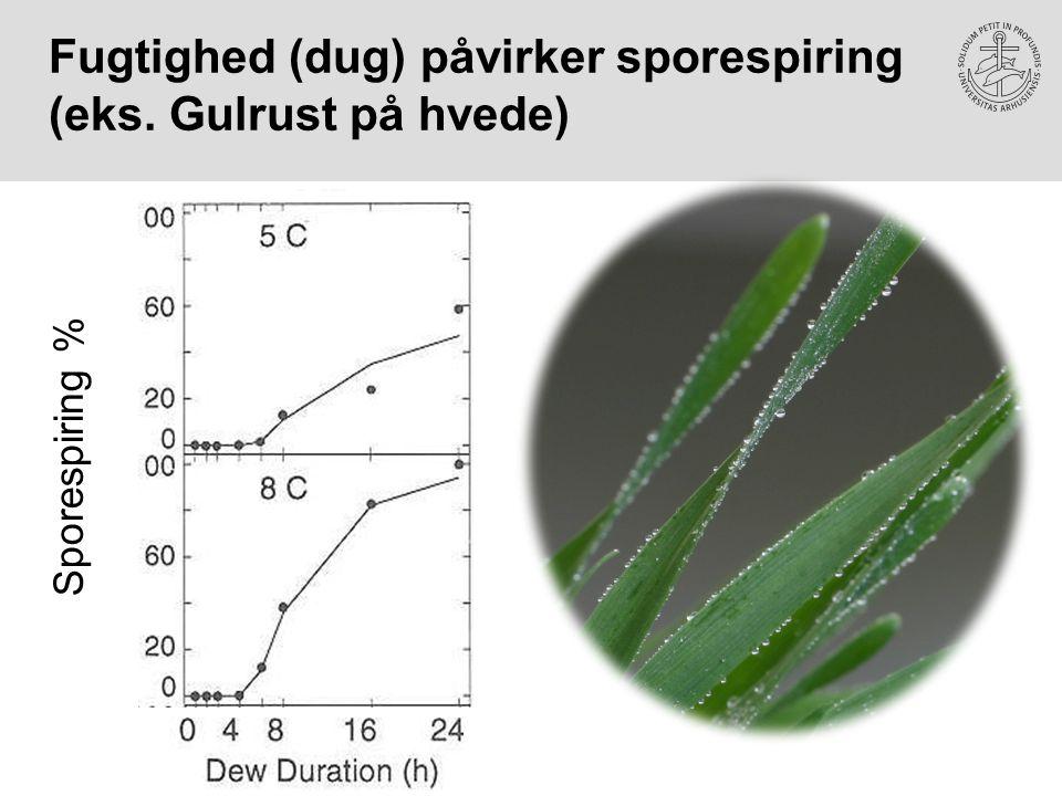 Fugtighed (dug) påvirker sporespiring (eks. Gulrust på hvede)
