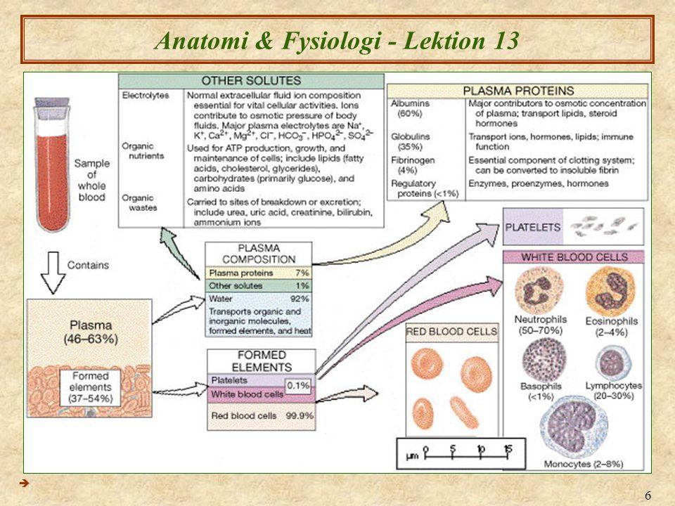 Anatomi & Fysiologi - Lektion 13