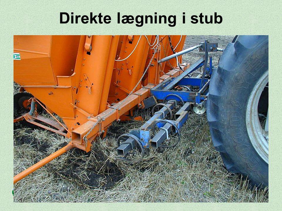 Direkte lægning i stub
