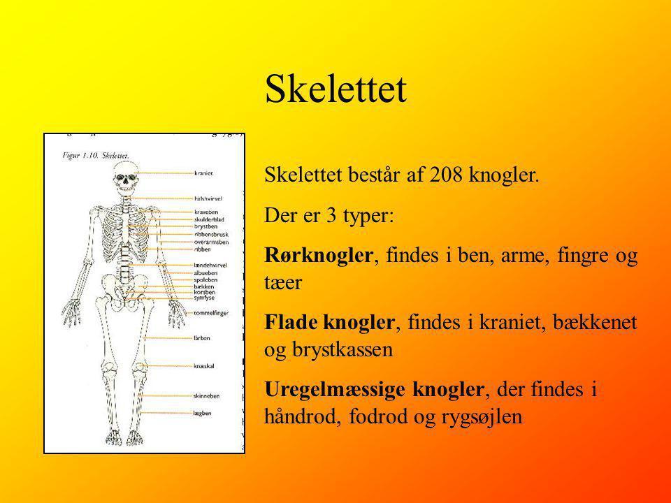 Skelettet Skelettet består af 208 knogler. Der er 3 typer:
