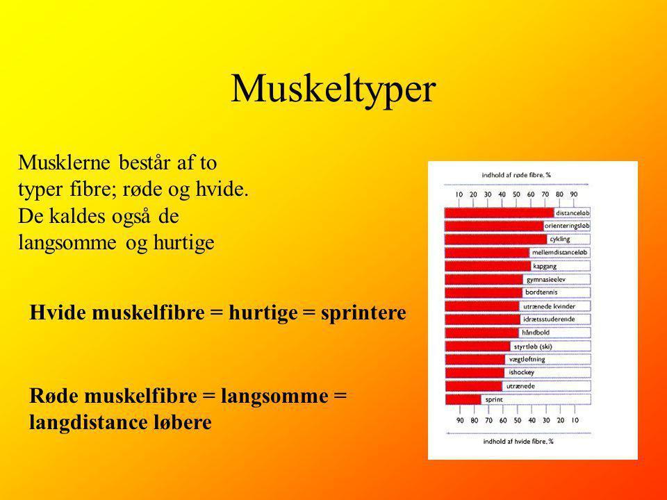 Muskeltyper Musklerne består af to typer fibre; røde og hvide. De kaldes også de langsomme og hurtige.