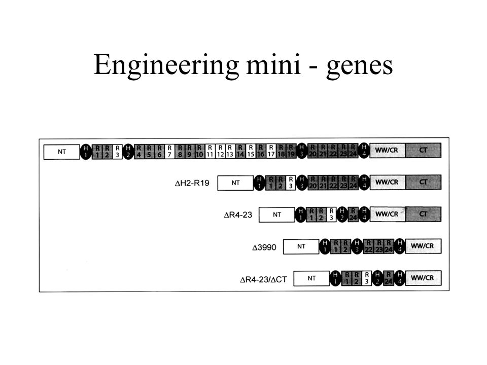 Engineering mini - genes