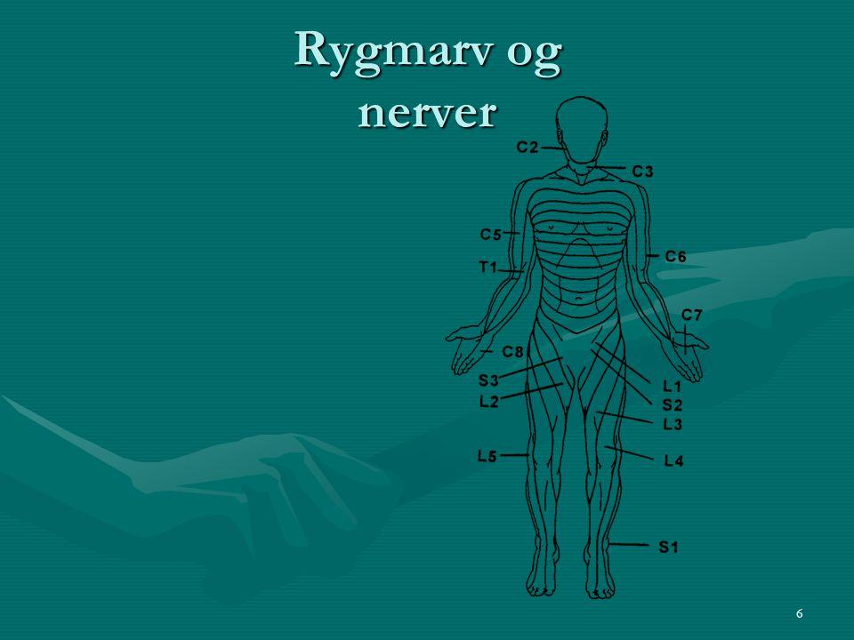 Rygmarv og nerver