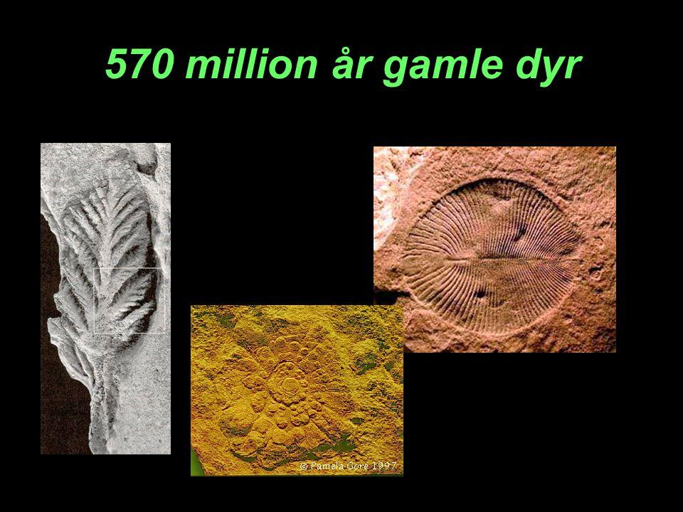 570 million år gamle dyr